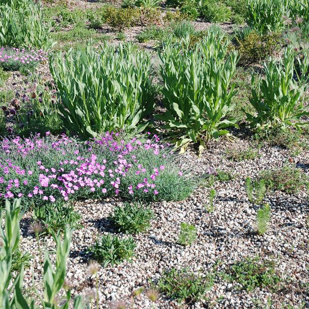 Bepflanzung auf der Polyterrasse